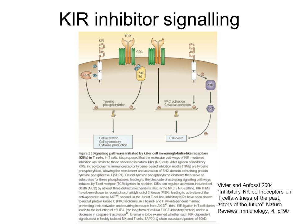 """KIR inhibitor signalling Vivier and Anfossi 2004 """"Inhibitory NK-cell receptors on T cells:witness of the past, actors of the future"""" Nature Reviews Im"""