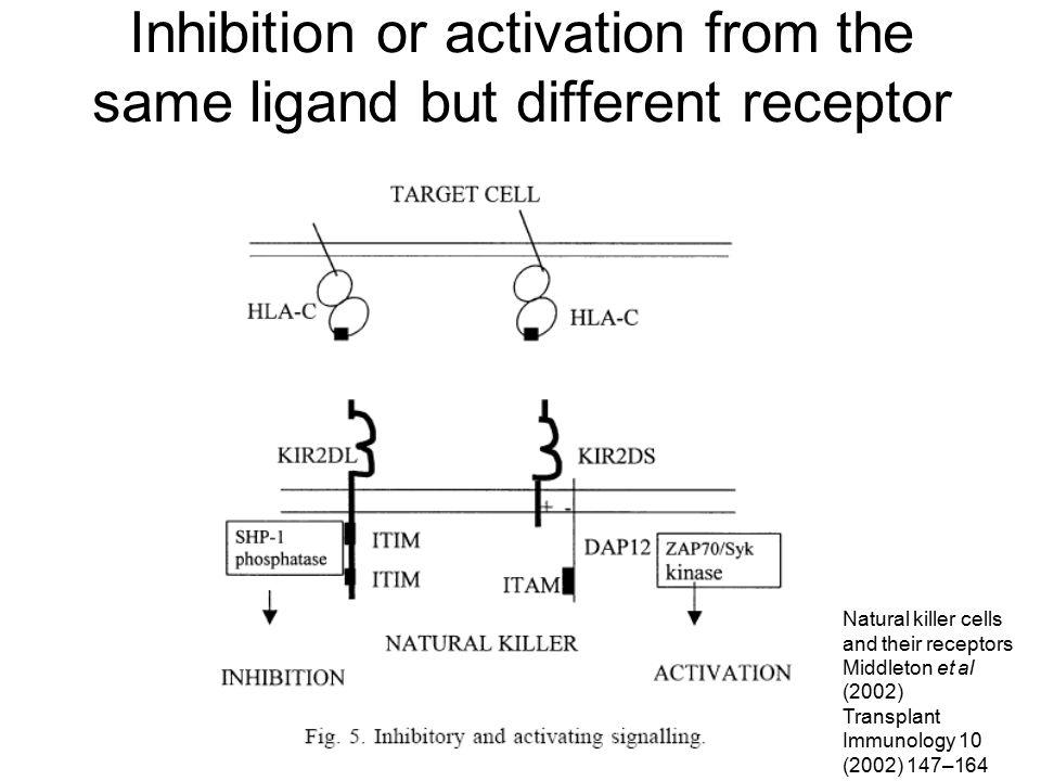 Inhibition or activation from the same ligand but different receptor Natural killer cells and their receptors Middleton et al (2002) Transplant Immuno