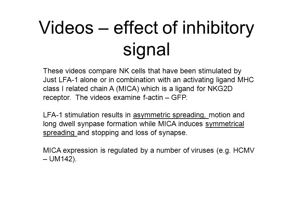 Videos – effect of inhibitory signal These videos compare NK cells that have been stimulated by Just LFA-1 alone or in combination with an activating