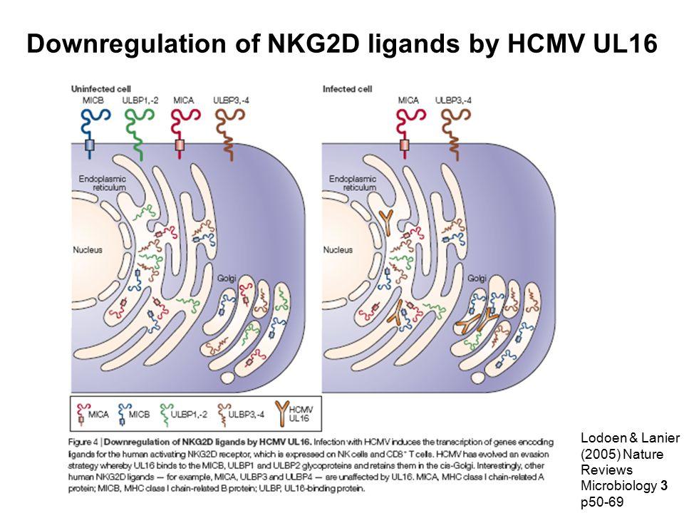Downregulation of NKG2D ligands by HCMV UL16 Lodoen & Lanier (2005) Nature Reviews Microbiology 3 p50-69