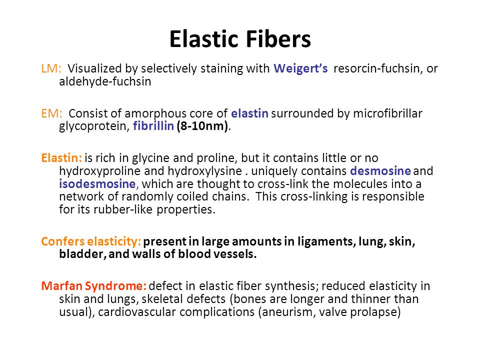 Elastic Fibers LM: Visualized by selectively staining with Weigert's, resorcin-fuchsin, or aldehyde-fuchsin EM: Consist of amorphous core of elastin surrounded by microfibrillar glycoprotein, fibrillin (8-10nm).