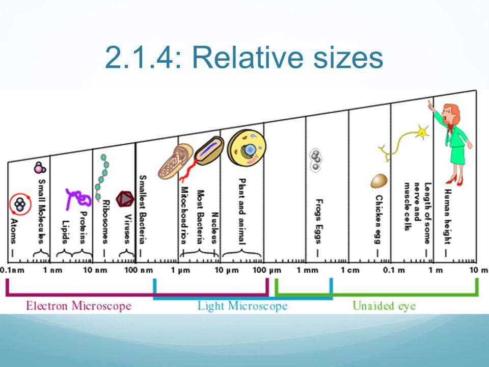 2.1.4: Relative sizes