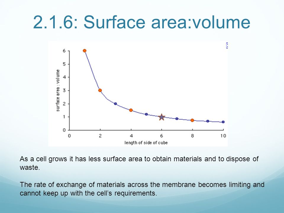 2.1.6: Surface area:volume As a cell grows it has less surface area to obtain materials and to dispose of waste.
