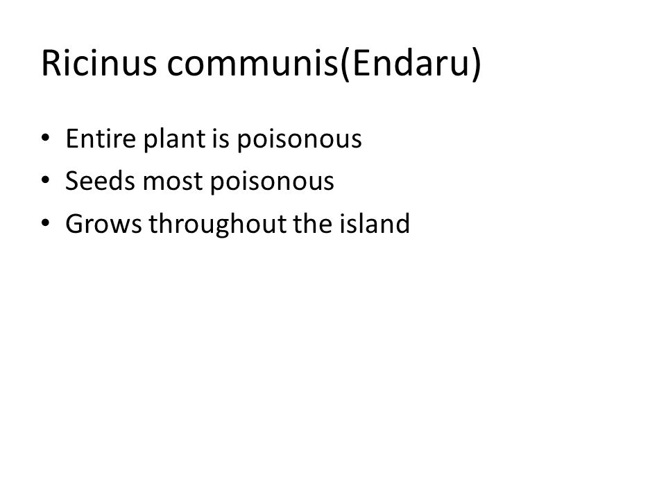 Ricinus communis(Endaru) Entire plant is poisonous Seeds most poisonous Grows throughout the island