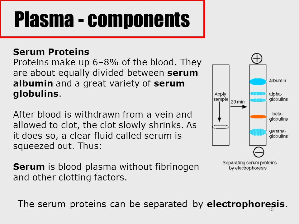 10 Serum Proteins Proteins make up 6–8% of the blood. They are about equally divided between serum albumin and a great variety of serum globulins. Aft