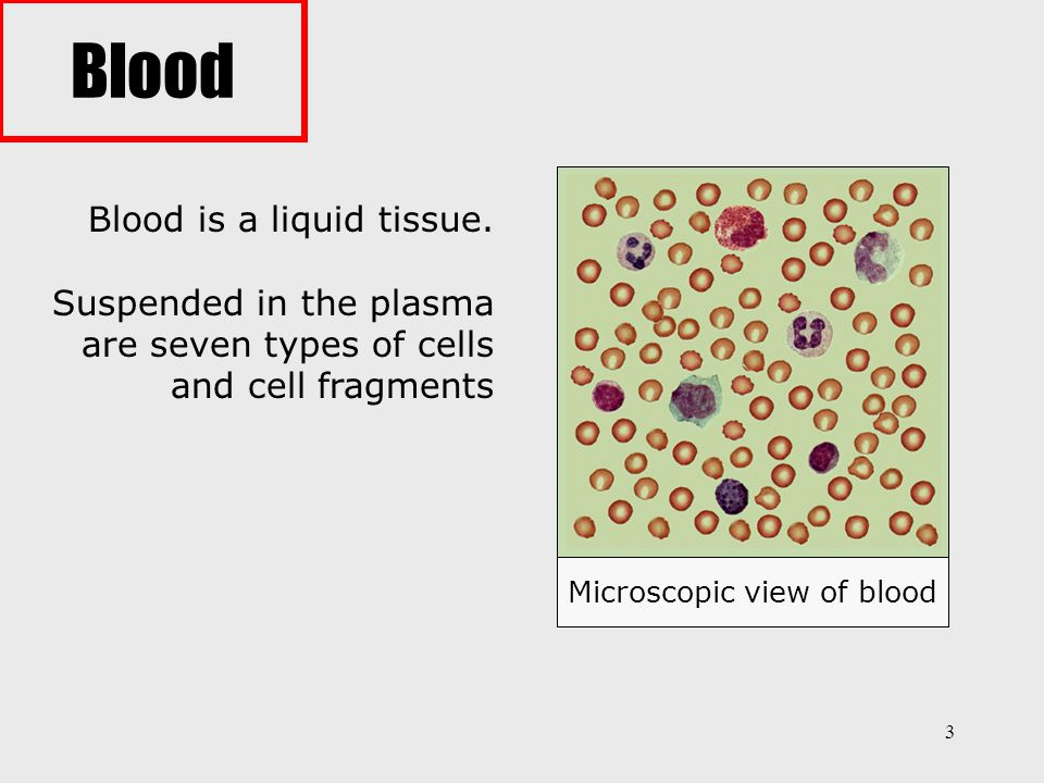 4 Blood performs two major functions: 1) transports through the body: - oxygen and carbon dioxide - food molecules (glucose, lipids, amino acids) - ions (e.g., Na +, Ca 2+, HCO 3 − ) - wastes (e.g., urea) - hormones - heat 2) defends the body against infections and other foreign materials.