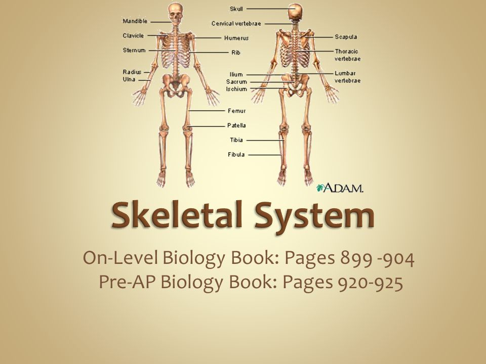 On-Level Biology Book: Pages 899 -904 Pre-AP Biology Book: Pages 920-925