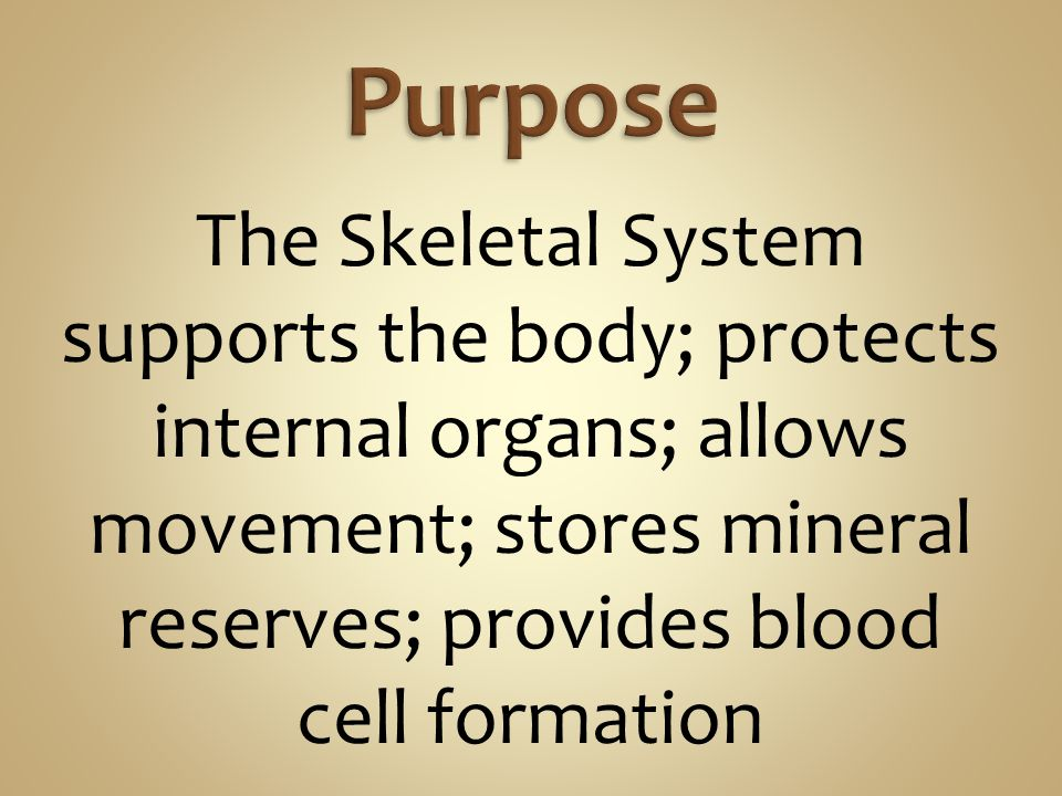 The Skeletal System supports the body; protects internal organs; allows movement; stores mineral reserves; provides blood cell formation