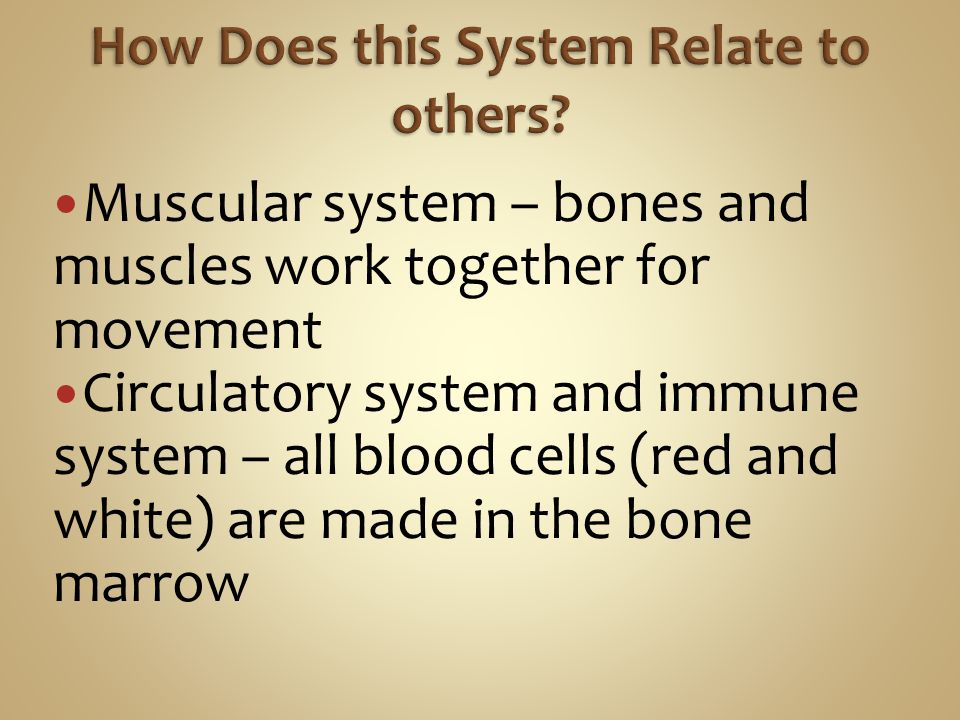 Muscular system – bones and muscles work together for movement Circulatory system and immune system – all blood cells (red and white) are made in the bone marrow