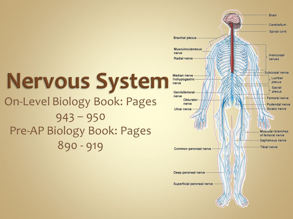 On-Level Biology Book: Pages 943 – 950 Pre-AP Biology Book: Pages 890 - 919