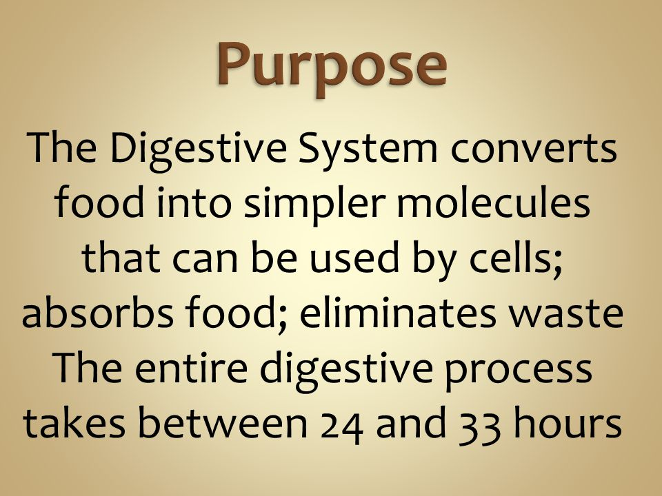 The Digestive System converts food into simpler molecules that can be used by cells; absorbs food; eliminates waste The entire digestive process takes between 24 and 33 hours
