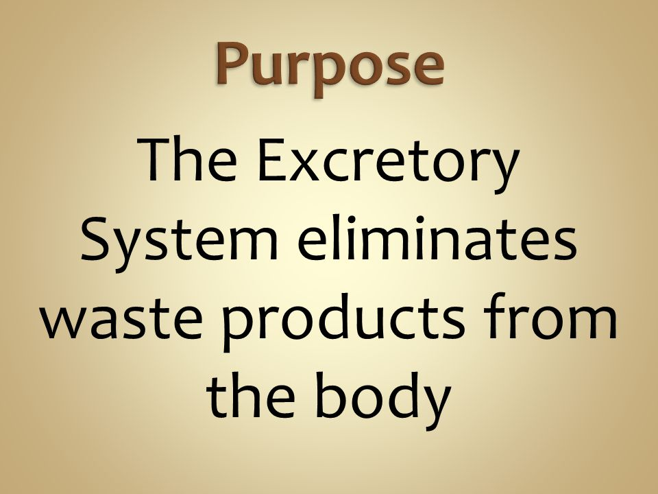 The Excretory System eliminates waste products from the body