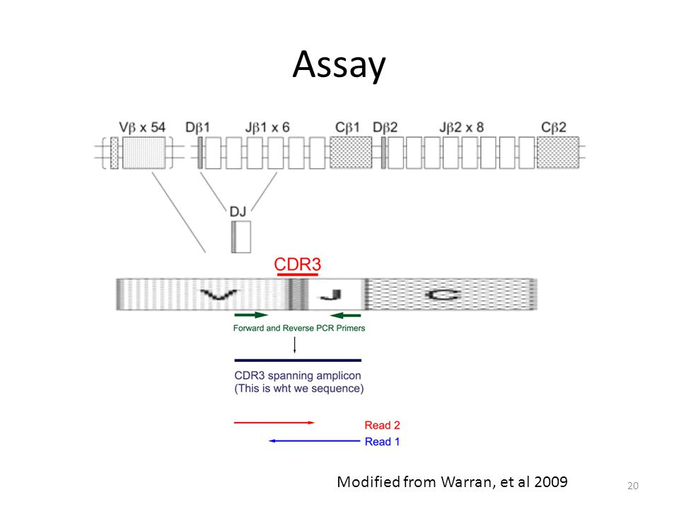 Assay Modified from Warran, et al 2009 20