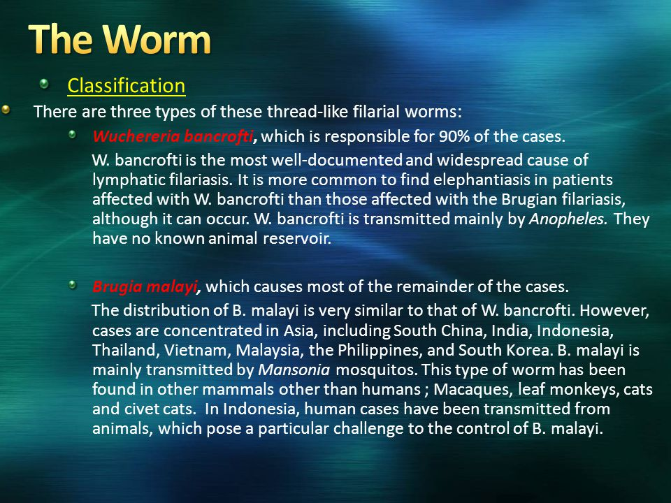 Classification There are three types of these thread-like filarial worms: Wuchereria bancrofti, which is responsible for 90% of the cases. W. bancroft