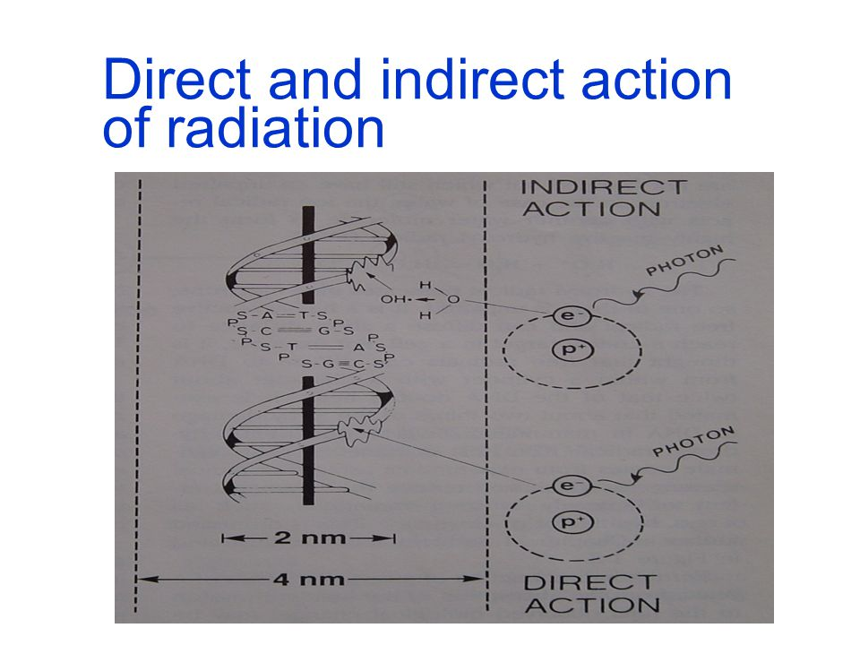 Direct and indirect action of radiation Direct action: charged particle directly interacts with the target molecule, e.g.