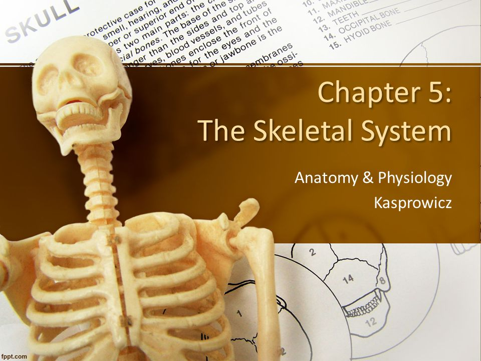 Chapter 5: The Skeletal System Anatomy & Physiology Kasprowicz