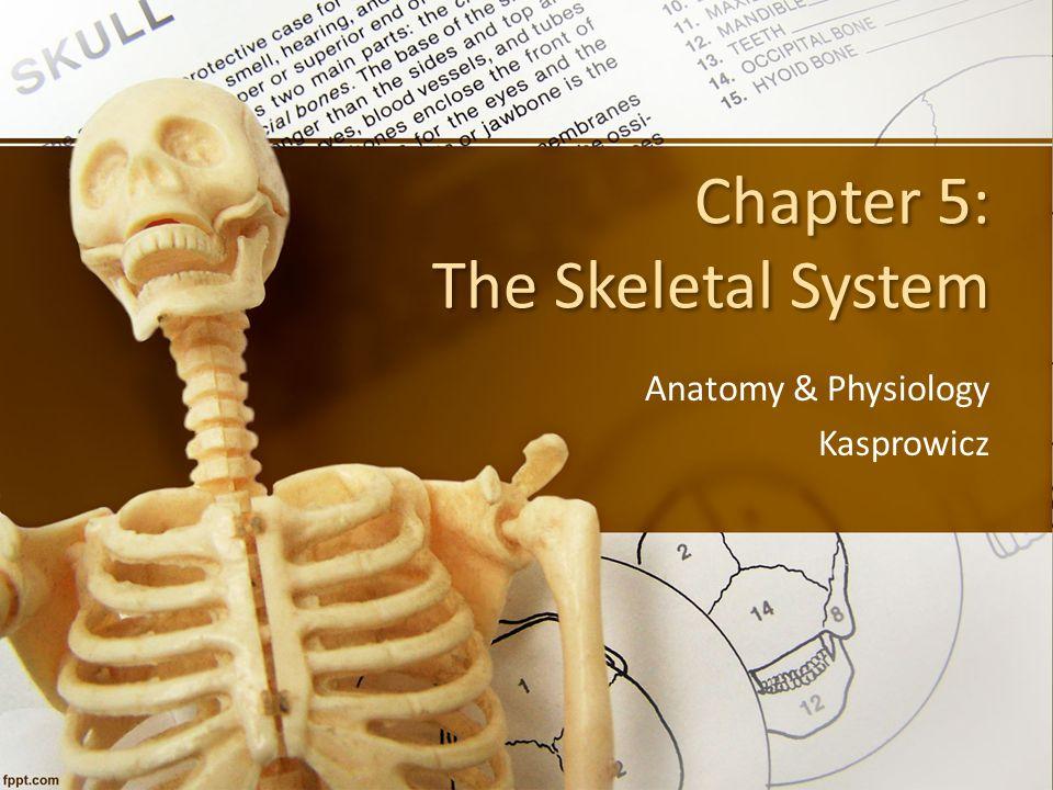 Parts of the Skeletal System  Bones (make up the skeleton)  Joints (articulations)  Cartilages  Ligaments (dense, regular connective tissue connecting bone to bone)