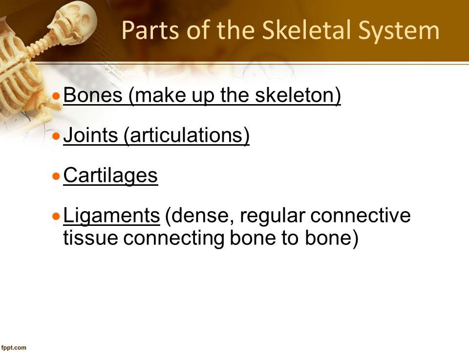 Parts of the Skeletal System  Bones (make up the skeleton)  Joints (articulations)  Cartilages  Ligaments (dense, regular connective tissue connec