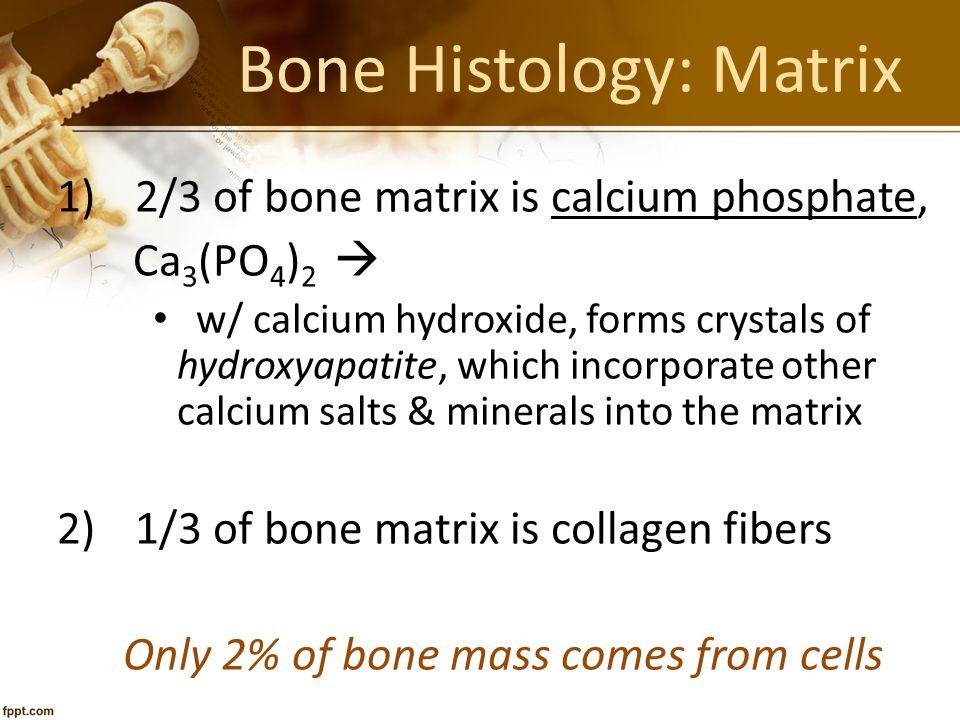 Bone Histology: Matrix 1)2/3 of bone matrix is calcium phosphate, Ca 3 (PO 4 ) 2  w/ calcium hydroxide, forms crystals of hydroxyapatite, which incor