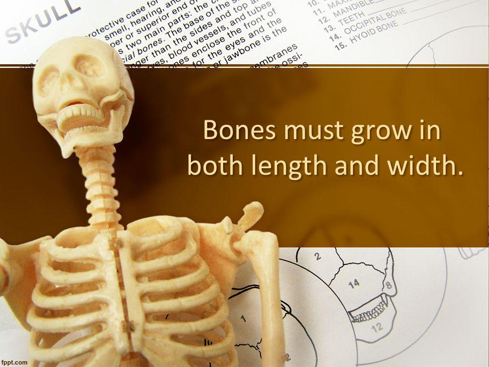 Bones must grow in both length and width.