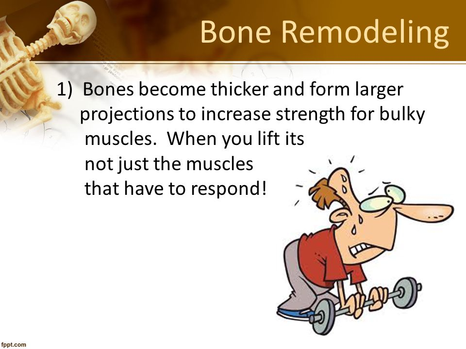 Bone Remodeling 1) Bones become thicker and form larger projections to increase strength for bulky muscles. When you lift its not just the muscles tha