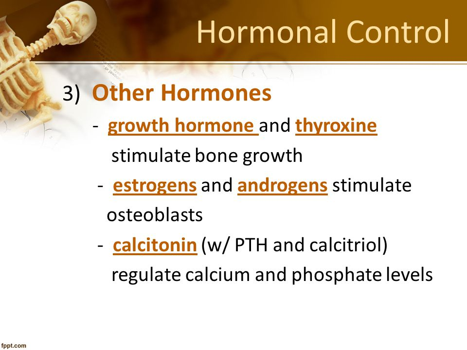Hormonal Control 3) Other Hormones - growth hormone and thyroxine stimulate bone growth - estrogens and androgens stimulate osteoblasts - calcitonin (