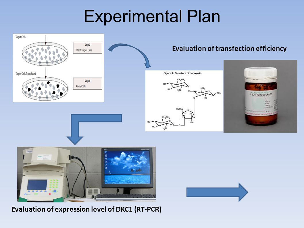 Experimental Plan Evaluation of expression level of DKC1 (RT-PCR) Evaluation of transfection efficiency
