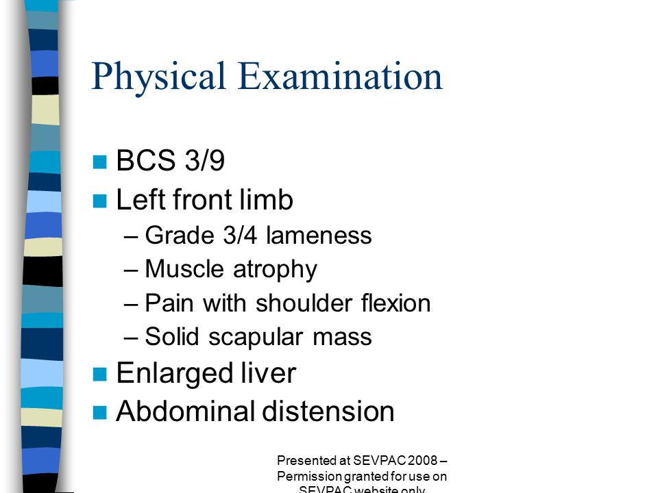 Physical Examination BCS 3/9 Left front limb –Grade 3/4 lameness –Muscle atrophy –Pain with shoulder flexion –Solid scapular mass Enlarged liver Abdom