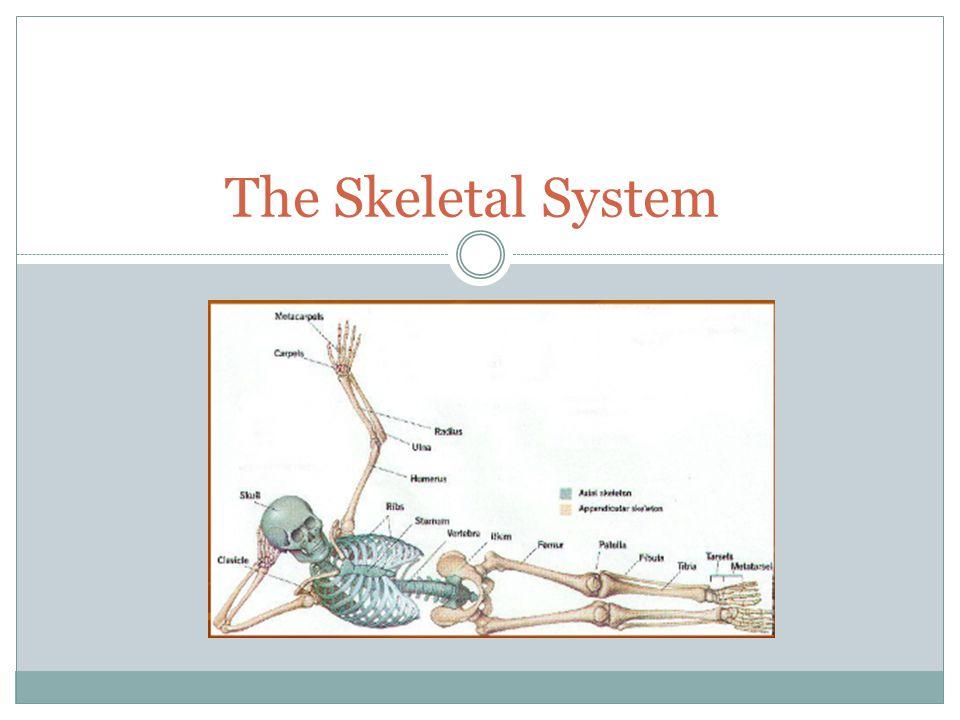 What is a bone.