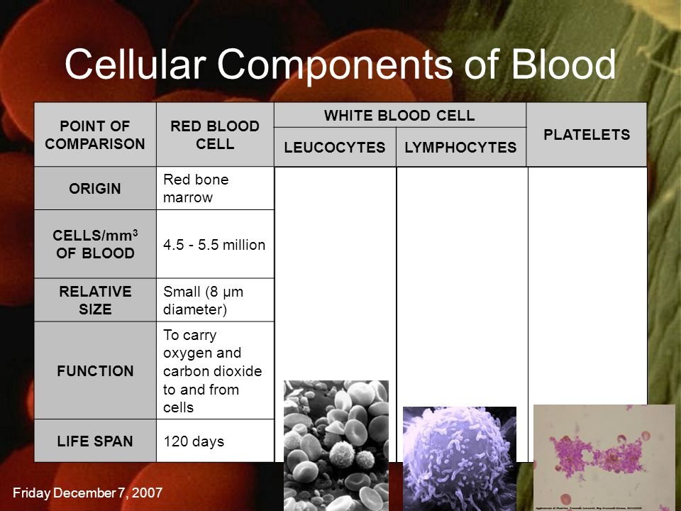 Friday December 7, 2007SBI3U | A. Manaktola Cellular Components of Blood POINT OF COMPARISON RED BLOOD CELL WHITE BLOOD CELL PLATELETS LEUCOCYTESLYMPH