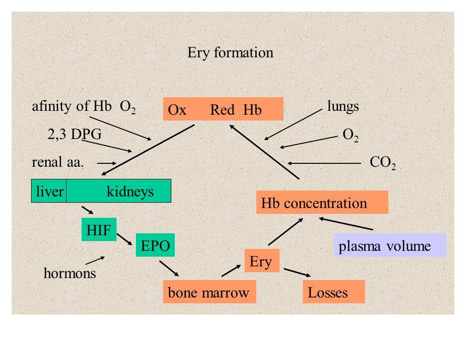 Hb – 135 –170 g/l A, F, dissociation curve Metabolism Ery - shape, deformability - ion pumps - hem in ferroform - ROS scavanging no mitochondriae glycolysis carboanhydrase G G-6P NAD GSH H 2 O + CO 2 H + + HCO 3 - F-6P NADH GSSG F –1,6 P NAD G – 3P NADH 1,3 DPG difosfogycerate mutasea 2,3 DPG 3 PG difosfoglycerate fosfatase