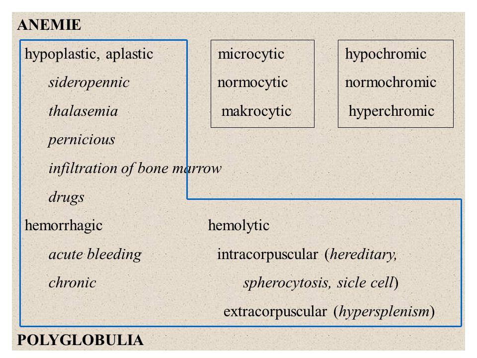 LEUKOCYTES - 7 x 10 9 /l % neutrophils 50 – 70 O 2 O 2 - H 2 O 2 OH eozinophilsí 1 – 4 granulocytes basophils < 1 monocytes 2 – 8 chemotaxis, secretion, adhesion, diapedesis, fagocytosis, ROS (NADPH oxidase, myeloperoxidase), proteases lymfocytes 20 – 40 T - helper/inducer - memory cells - supressors - cytotoxic - K - N K B - plasmatic - memory cells NADPH NADP