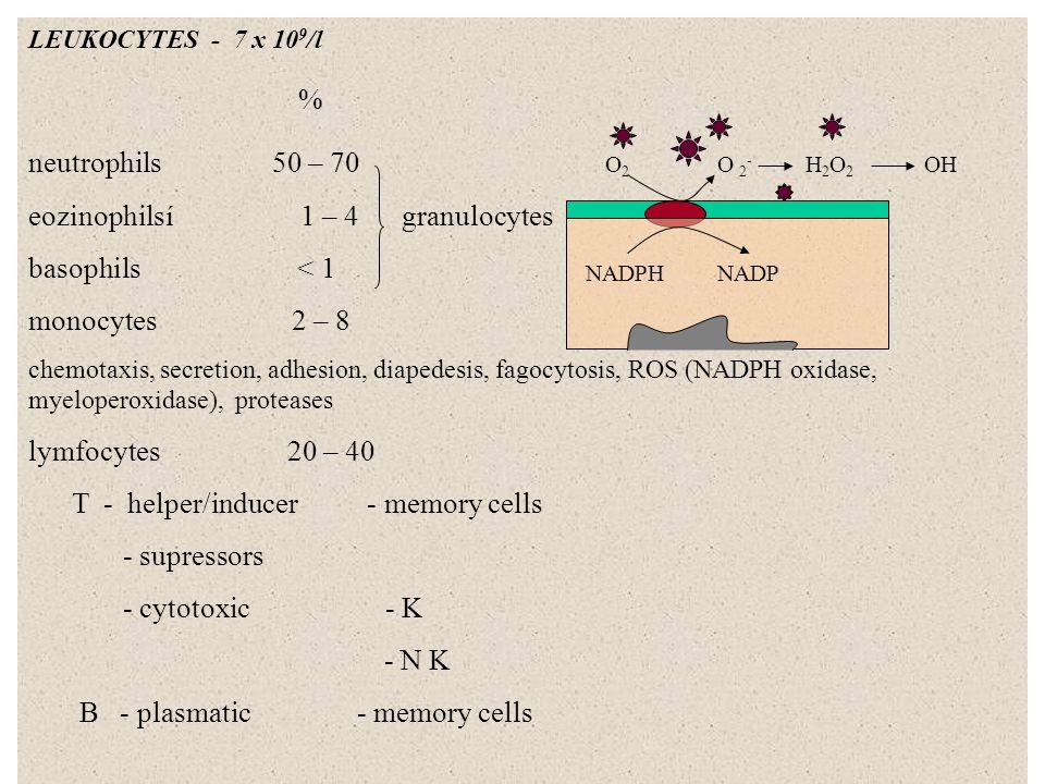 TROMBOCYTES 250 x 10 9 /l 2 – 4 u microtubuli, receptors for collagen, actin + myosin, granules (ADP, serotin), α granules (PDGF, PAF) HEMOSTASIS: 1) vessels – vasoconstriction (wall, serotonin, tromboxan A 2 ) 2) platelets - adhesion (receptors, von Willebrandův f.) - change of the shape - aggregation ADP plug granules TXA 2 vasokonstriction