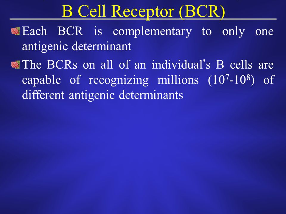 Each BCR is complementary to only one antigenic determinant The BCRs on all of an individual ' s B cells are capable of recognizing millions (10 7 -10