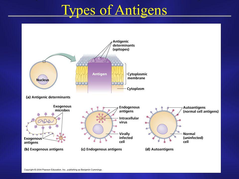 Types of Antigens