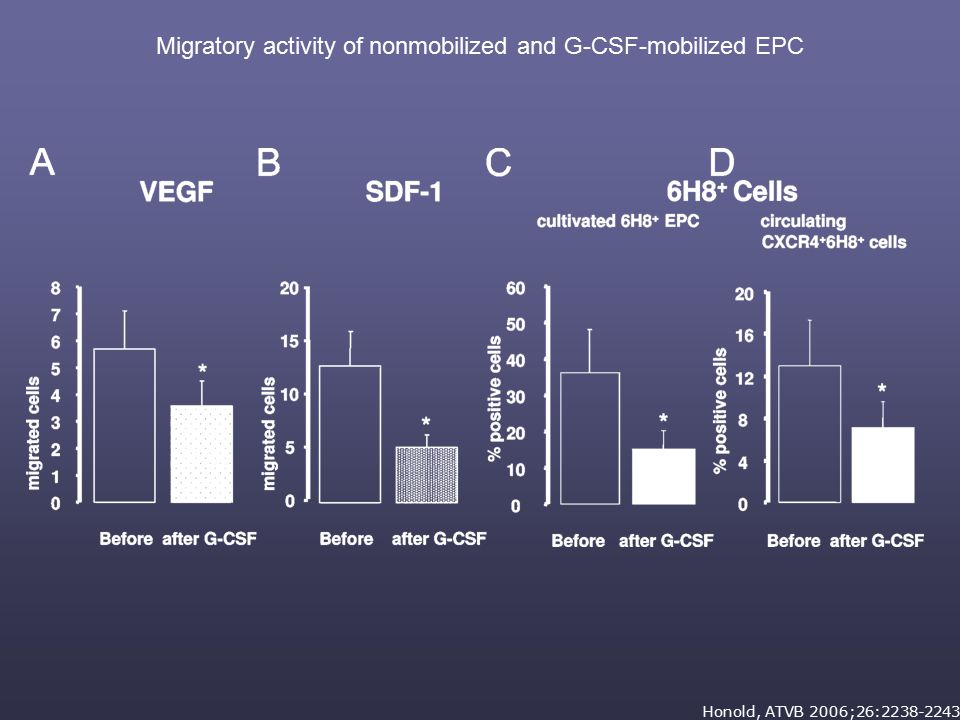 CELL MOBILIZATION FOR IMPROVEMENT OF LV FUNCTION  IMPROVED CONTRACTILITY IN AREAS REMOTE FROM THE INFARCT AREA  MYOCARDIAL REGENERATION AND PROLIFERATION CONFINED TO INFARCTED AREA  RESPONSIVENESS OF BONE MARROW CELLS TO CHEMOATTRACTANTS DECLINES IN AGE-DEPENDENT FASHION  STANDAD MOBILIZATION AGENTS (G-CSF) IMPAIR THE RESPONSIVENES OF PROGENITOR CELLS TO PIVOTAL CHEMOATTRACTANTS