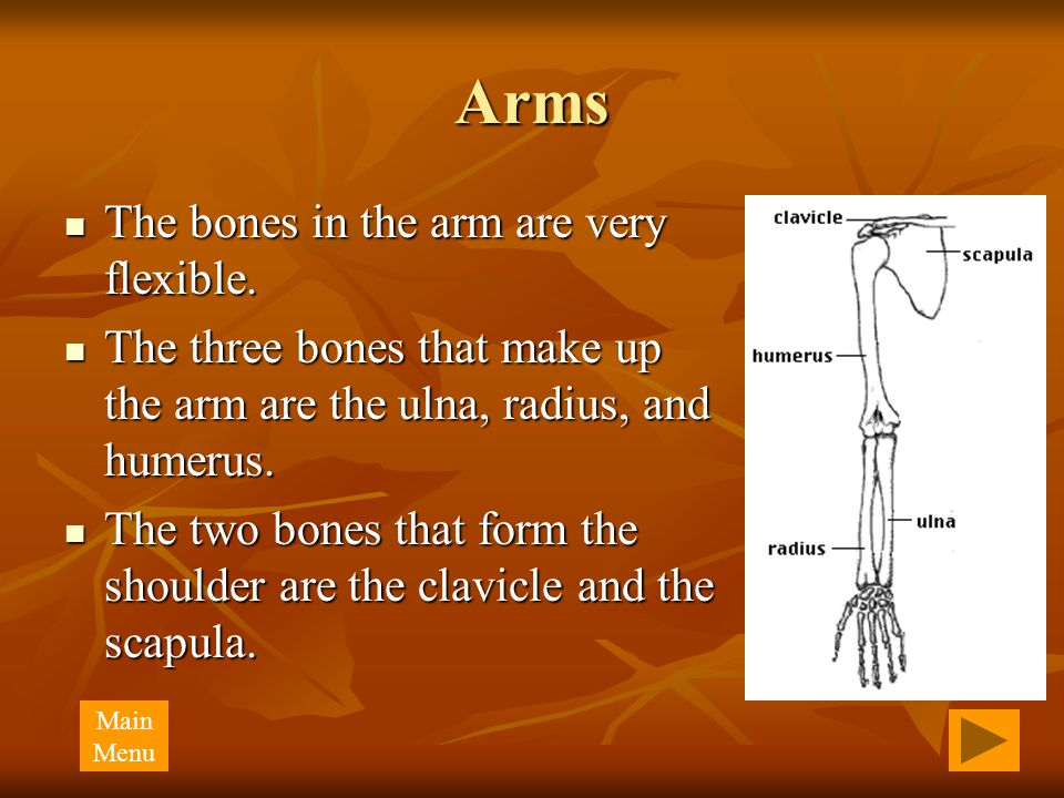 Arms The bones in the arm are very flexible. The bones in the arm are very flexible.