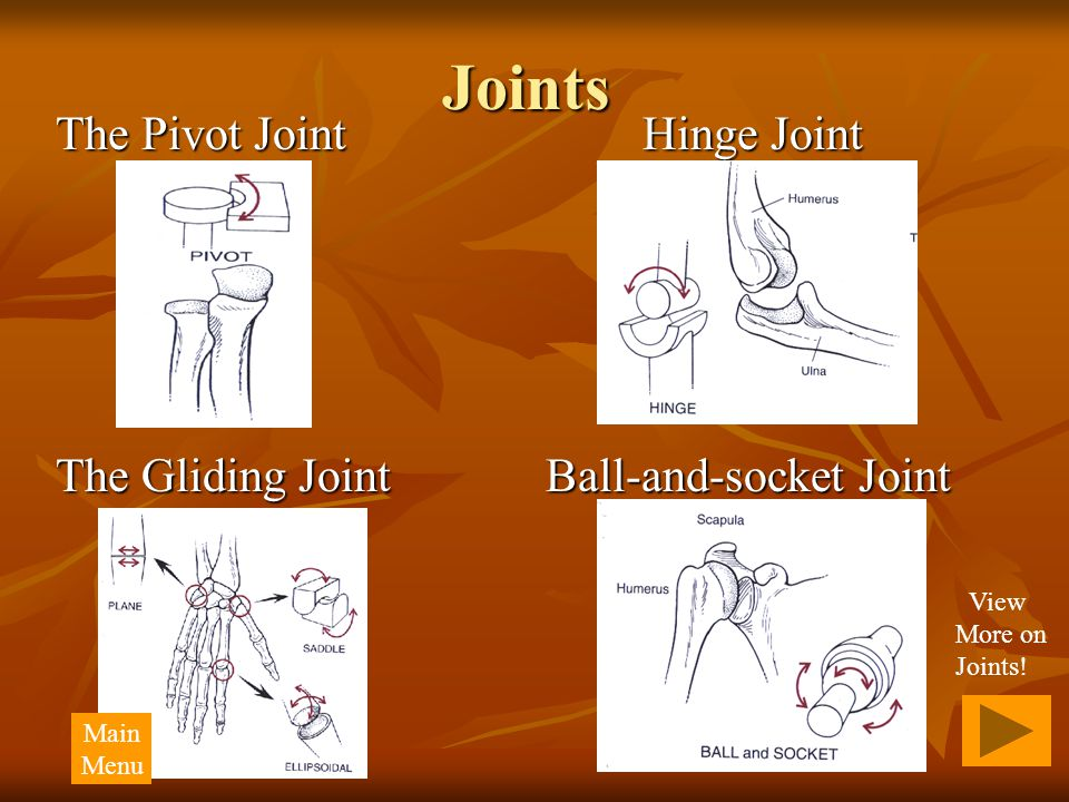 Joints The Pivot Joint Hinge Joint The Gliding Joint Ball-and-socket Joint View More on Joints! Main Menu