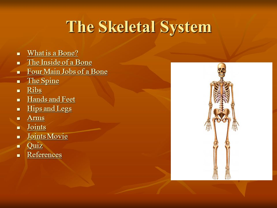 The Skeletal System What is a Bone? What is a Bone? What is a Bone? What is a Bone? The Inside of a Bone The Inside of a Bone The Inside of a Bone The