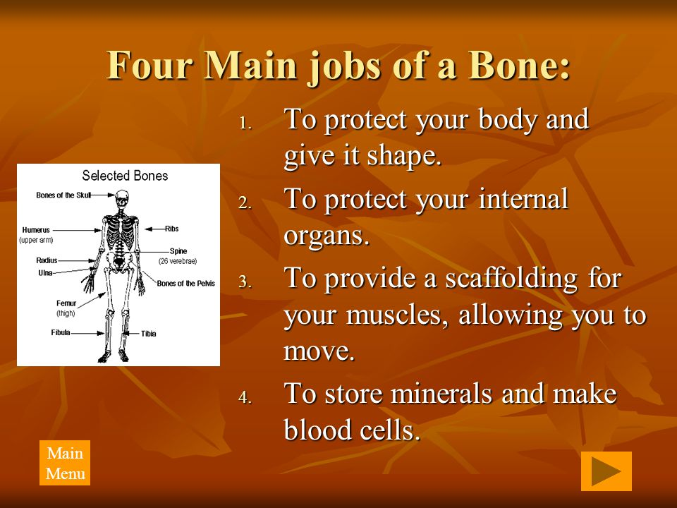 Four Main jobs of a Bone: 1. To protect your body and give it shape. 2. To protect your internal organs. 3. To provide a scaffolding for your muscles,