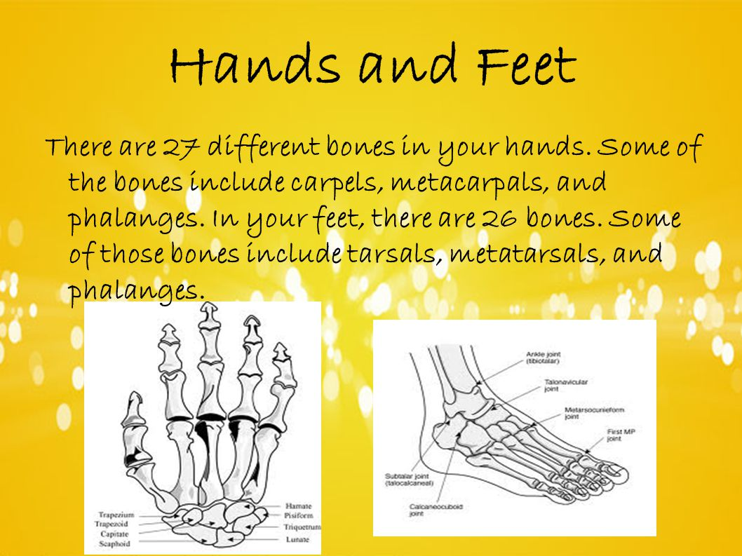 Hands and Feet There are 27 different bones in your hands.