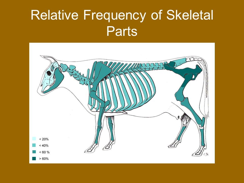 McCoy-Silvas Cow Faunal Remains Compared with Ontiveros Adobe and Rose-Robinson Sites