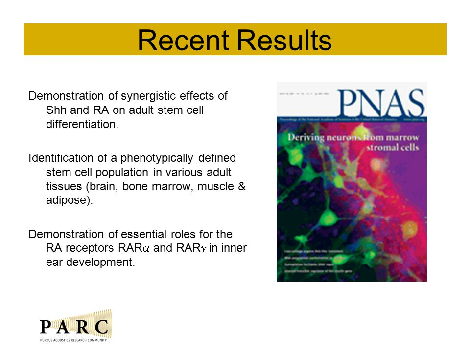 Recent Results Demonstration of synergistic effects of Shh and RA on adult stem cell differentiation.