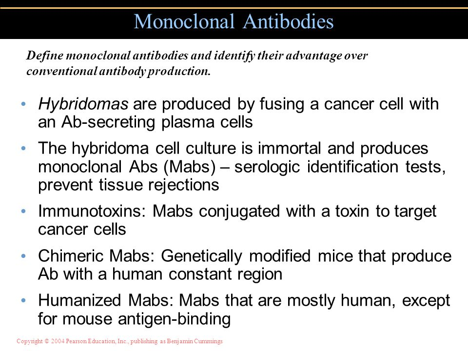 Copyright © 2004 Pearson Education, Inc., publishing as Benjamin Cummings Monoclonal Antibodies Hybridomas are produced by fusing a cancer cell with a