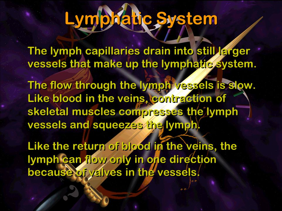 The lymph capillaries drain into still larger vessels that make up the lymphatic system. The flow through the lymph vessels is slow. Like blood in the