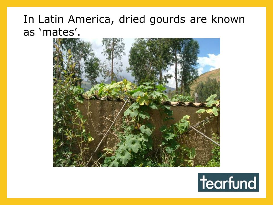 In Latin America, dried gourds are known as 'mates'.