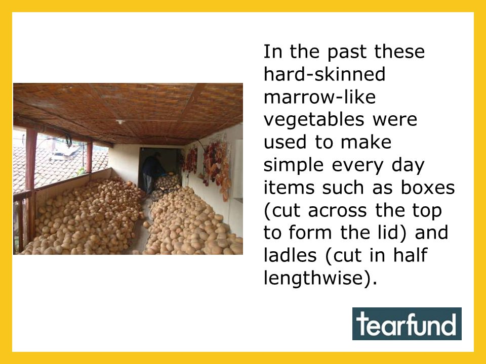 In the past these hard-skinned marrow-like vegetables were used to make simple every day items such as boxes (cut across the top to form the lid) and ladles (cut in half lengthwise).