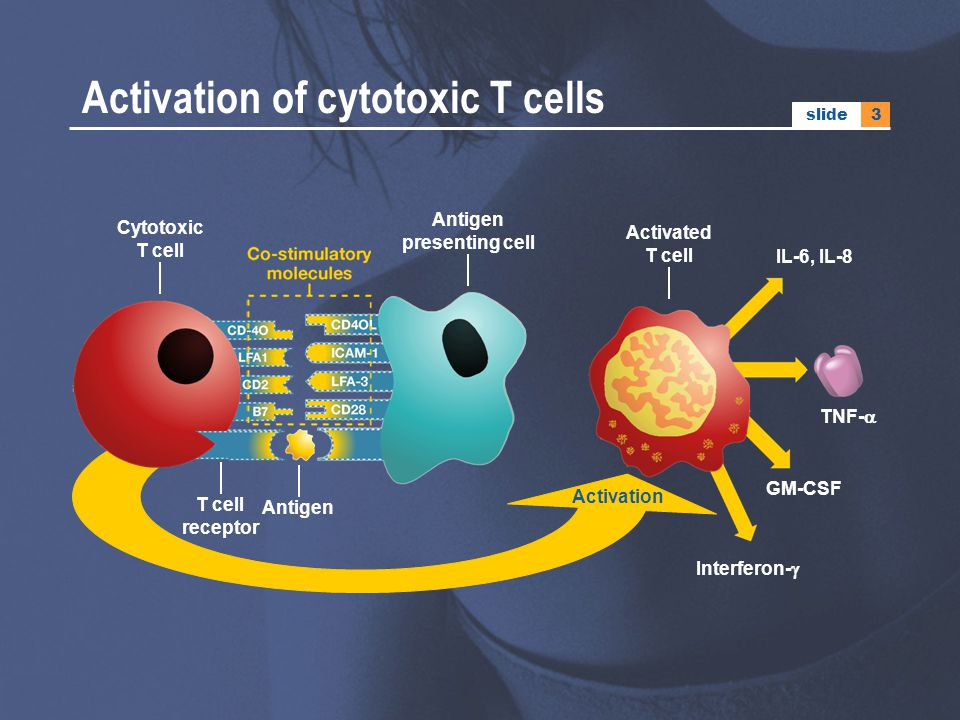 3slide Activation Activation of cytotoxic T cells Antigen Cytotoxic T cell Antigen presenting cell T cell receptor Activated T cell IL-6, IL-8 Interfe
