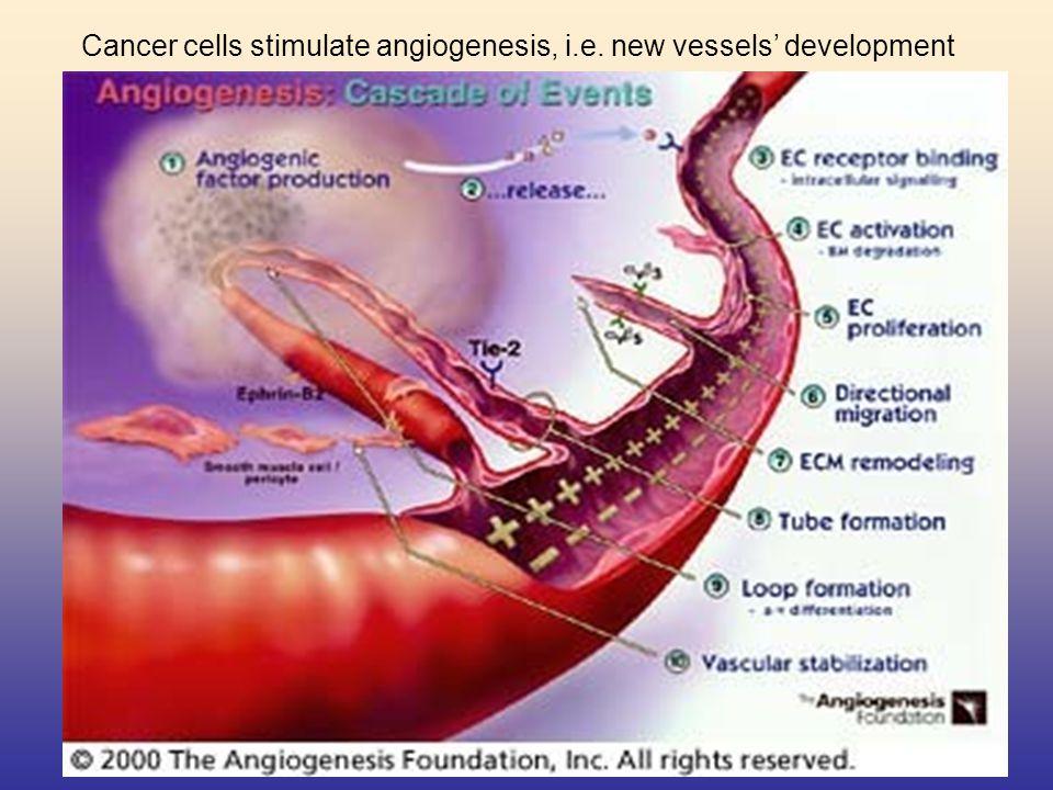 Cancer cells stimulate angiogenesis, i.e. new vessels' development