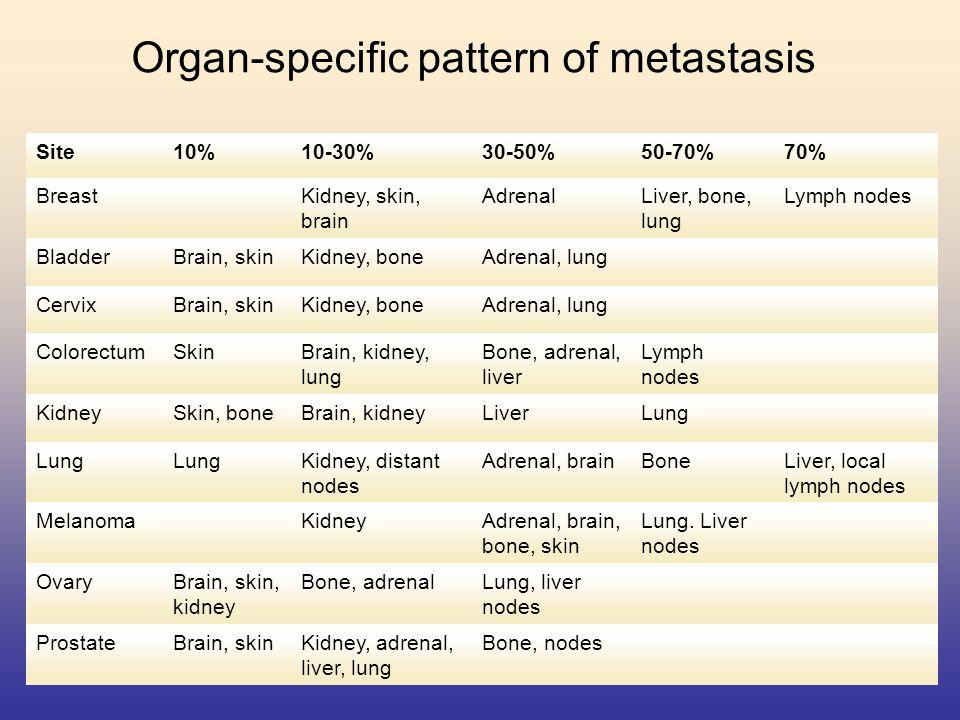 Organ-specific pattern of metastasis Site10%10-30%30-50%50-70%70% BreastKidney, skin, brain AdrenalLiver, bone, lung Lymph nodes BladderBrain, skinKid
